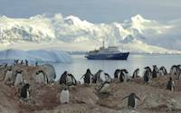 Penguins on shore during cruise in Antarctica