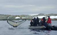 Whale watching from boat in Antarctic waters