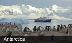 Antarctic Wildlife Cruise