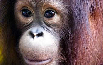 Borneo Wildlife Safari - rainforest & reef