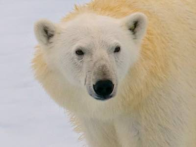 Arctic & Antarctic Wildlife Travel